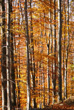 piękny las Obrazy Royalty Free