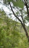 Piękny las Obraz Royalty Free