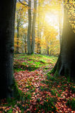 piękny las jesieni Fotografia Royalty Free