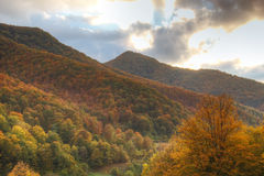 piękny las jesieni Obrazy Stock