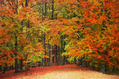 piękny las jesieni Obraz Royalty Free
