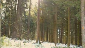 Piękny las w zimie w Kirchschlag bei Linz w Górnym Austria zbiory