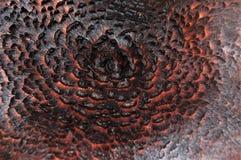 Piękny lasowy grzyb, spojrzenia jak piórka zdjęcia royalty free