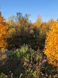 Piękny lasu i rzeki jesieni krajobrazowy widok zdjęcia stock