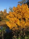 Piękny lasu i rzeki jesieni krajobrazowy widok fotografia stock