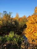 Piękny lasu i rzeki jesieni krajobrazowy widok zdjęcie royalty free