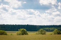 Piękny lato krajobraz w wsi z traw drzewami lasowymi Obraz Stock
