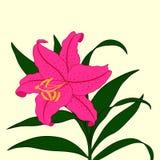 Piękny leluja kwiat na lekkim tle Ilustracja Wektor