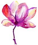Piękny menchia kwiat. Zdjęcie Royalty Free
