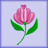 Piękny menchia kwiat dla ornamentu Obraz Stock