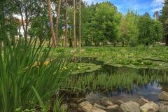 Piękny miasto park, kwiaty i Zdjęcia Stock