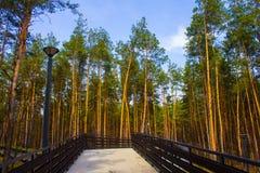 piękny most park Las Zdjęcia Royalty Free