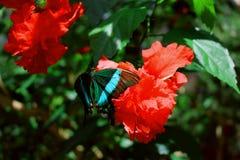 Piękny motyl Obrazy Stock
