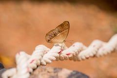 Piękny motyl, kolorowy motyl, motyl w ogrodowy plenerowym Obraz Stock