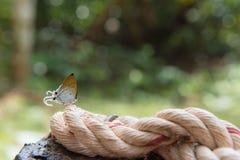Piękny motyl, kolorowy motyl, motyl w ogrodowy plenerowym Zdjęcie Stock