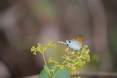 Piękny motyl, kolorowy motyl, motyl w ogrodowy plenerowym Obraz Royalty Free