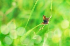 Piękny motyl na naturalnym bokeh tle Obrazy Stock