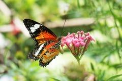 Piękny motyli kwiat Obrazy Stock