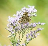 piękny motyli kwiat Obrazy Royalty Free