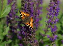 piękny motyli kwiat Zdjęcia Stock