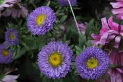 piękny niebieski blisko kwiaty, obrazy stock