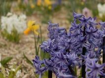 piękny niebieski blisko kwiaty, Zdjęcie Stock
