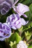 piękny niebieski kwiat Zdjęcie Stock