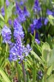 piękny niebieski kwiat Zdjęcia Stock
