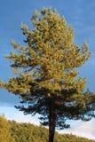 Piękny niebieskiego nieba abov drzewo Obraz Stock