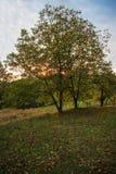 Piękny niebieskiego nieba abov drzewo Zdjęcie Stock