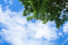 Piękny niebo przy rankiem Obrazy Stock