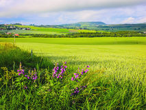 Piękny norwegu krajobraz przed zmierzchem obraz royalty free