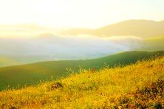 Piękny obszar trawiasty (26) Obraz Royalty Free