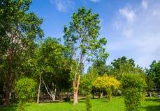 piękny ogród Zdjęcie Stock