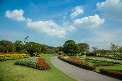 Piękny ogród z kwitnienie kwiatami Zdjęcia Stock
