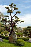 piękny ogrodowy naturalny tropikalny Zdjęcie Stock