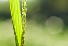 Piękny ostrze zielona trawa Zdjęcia Royalty Free
