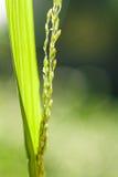 Piękny ostrze zielona trawa Obraz Royalty Free