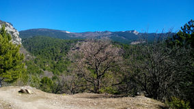 Piękny panoramiczny widok zielony las, jaskrawy niebieskie niebo i osamotniony brown drzewo w przedpolu, Zdjęcia Royalty Free