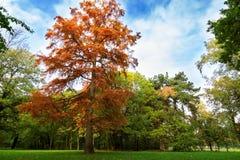 Piękny park w jesieni Fotografia Stock