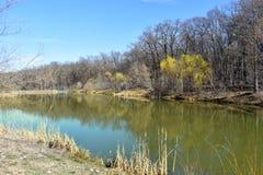 Pi?kny parkowy jezioro z drzewami odbija? w cthe crystaline wodzie fotografia royalty free
