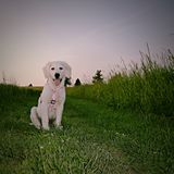 piękny pies Fotografia Royalty Free