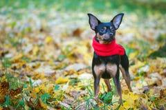 Piękny pies, szczeniak Zdjęcia Royalty Free
