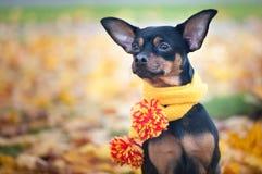 Piękny pies, szczeniak Fotografia Stock
