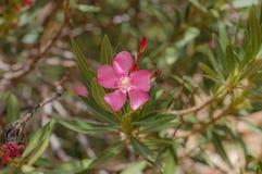 Piękny pinky kwiat w lesie zdjęcia royalty free
