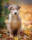 Piękny plenerowy portret szczeniak zdjęcia stock