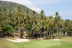 Piękny pole golfowe i drzewko palmowe Wyspy Koh Samui, Tajlandia Zdjęcie Royalty Free