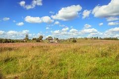 Piękny pole w jaskrawym letnim dniu Zdjęcia Stock