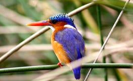 Piękny ptak Zdjęcia Royalty Free