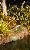 piękny ptak zdjęcie royalty free